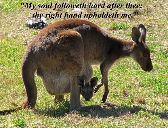 Kangaroos in Australia (Photo by: Mark j. Booth)